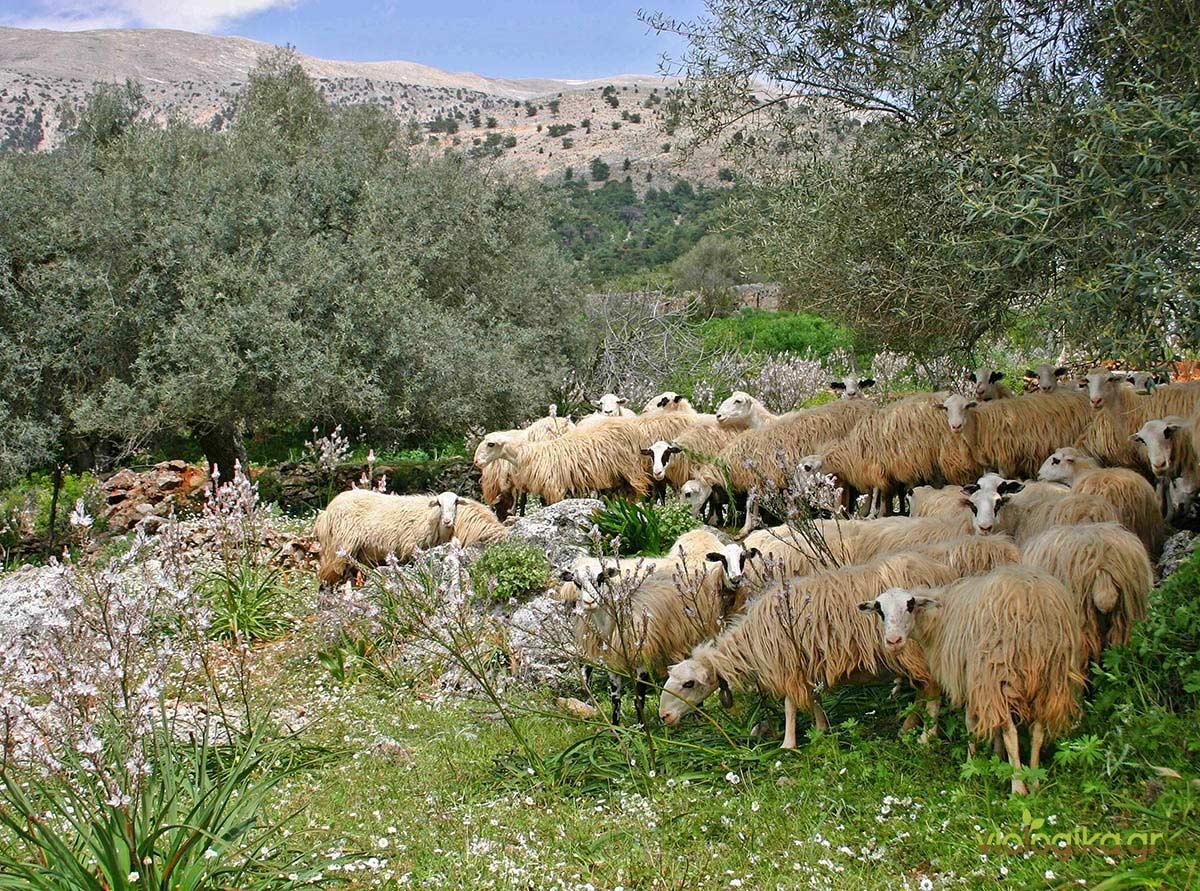 Η Ελληνική φύση