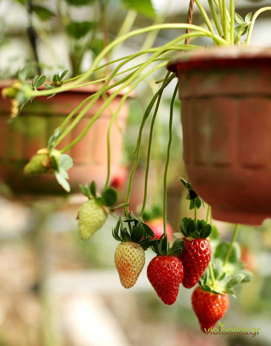 Τί μπορούμε να καλλιεργήσουμε μόνοι μας;