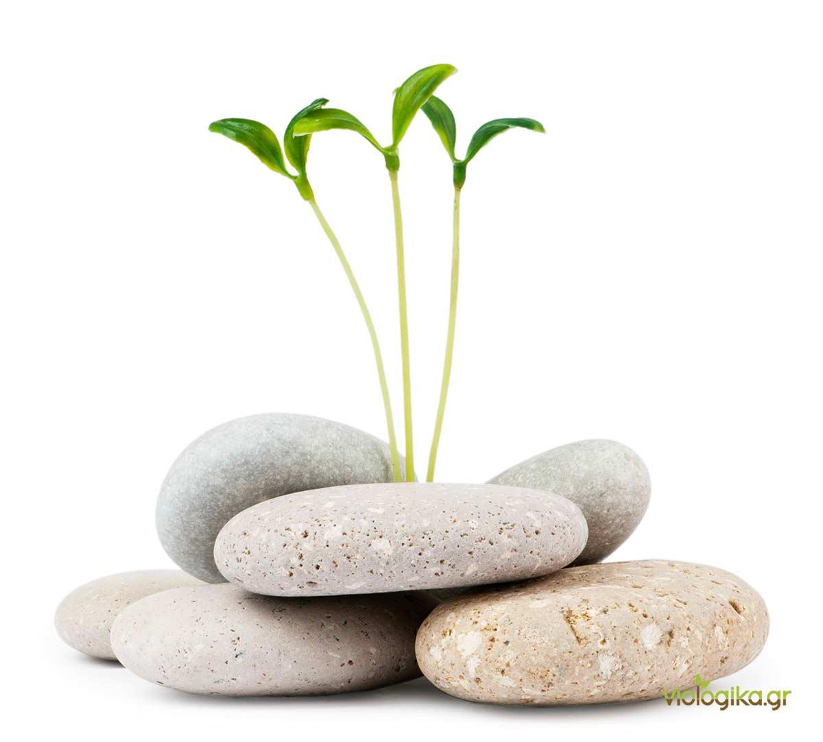Καλλιέργειες χωρίς χώμα