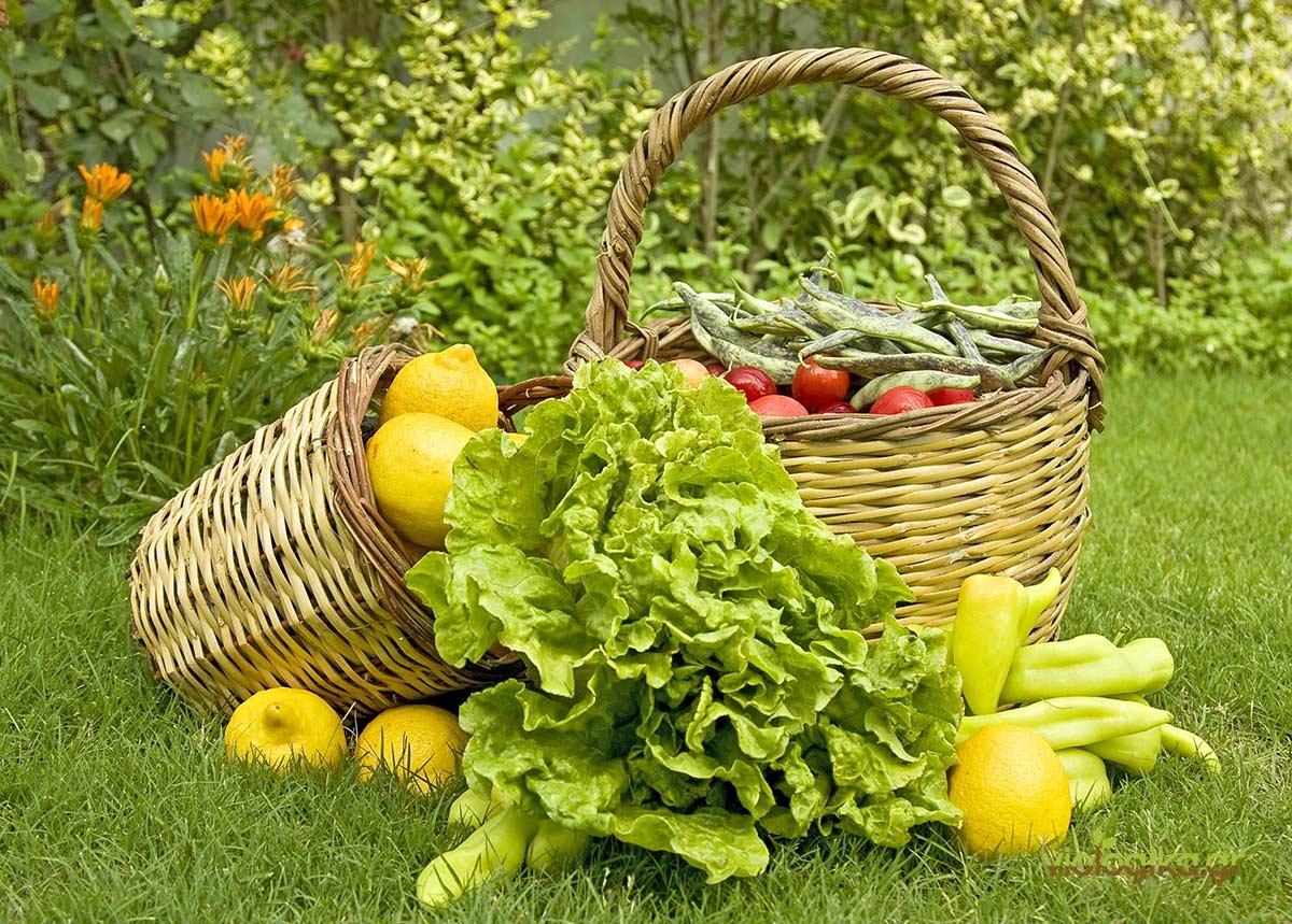 Αποτέλεσμα εικόνας για Βιολογικές Καλλιέργειες