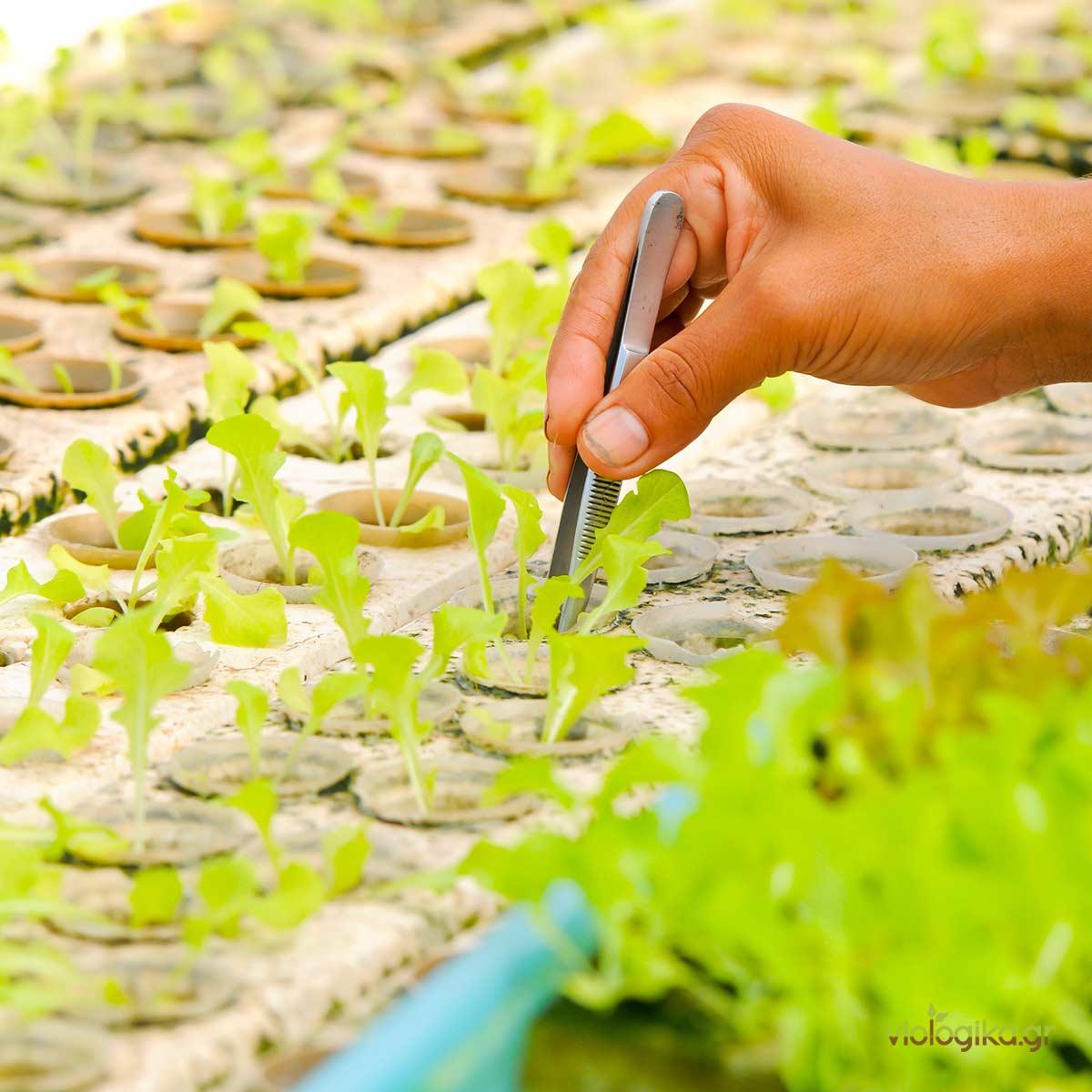 Πλεονεκτήματα και Μειονεκτήματα Υδροπονικής καλλιέργειας