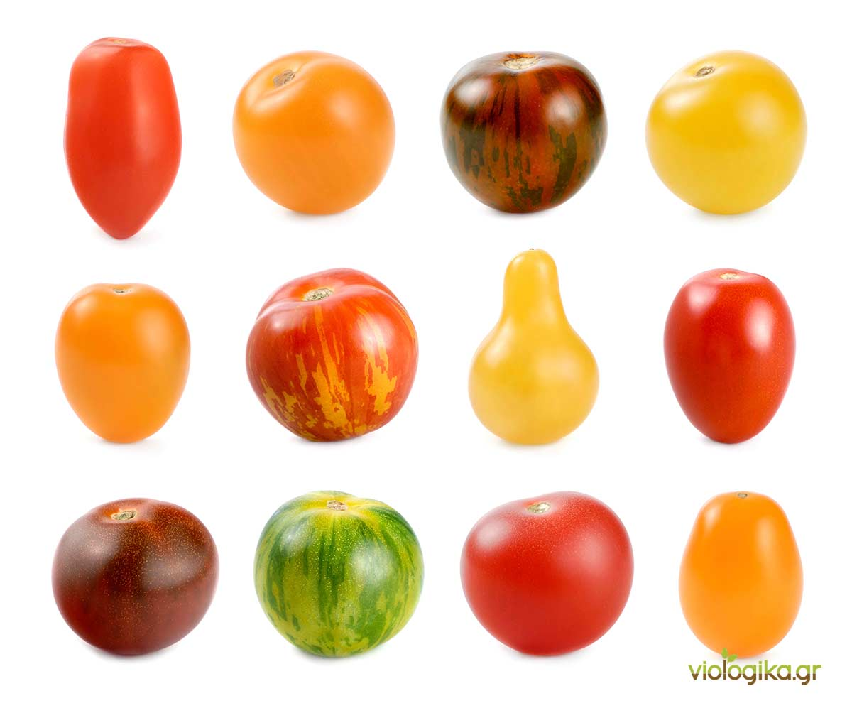Ποικιλίες βιολογικής ντομάτας