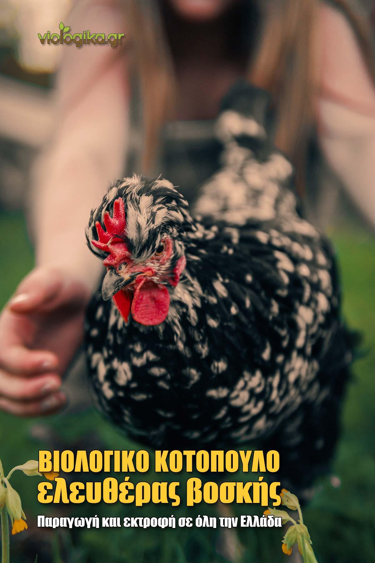 Βιολογικά κοτόπουλα ελευθέρας βοσκής, παραγωγή σε όλη την Ελλάδα