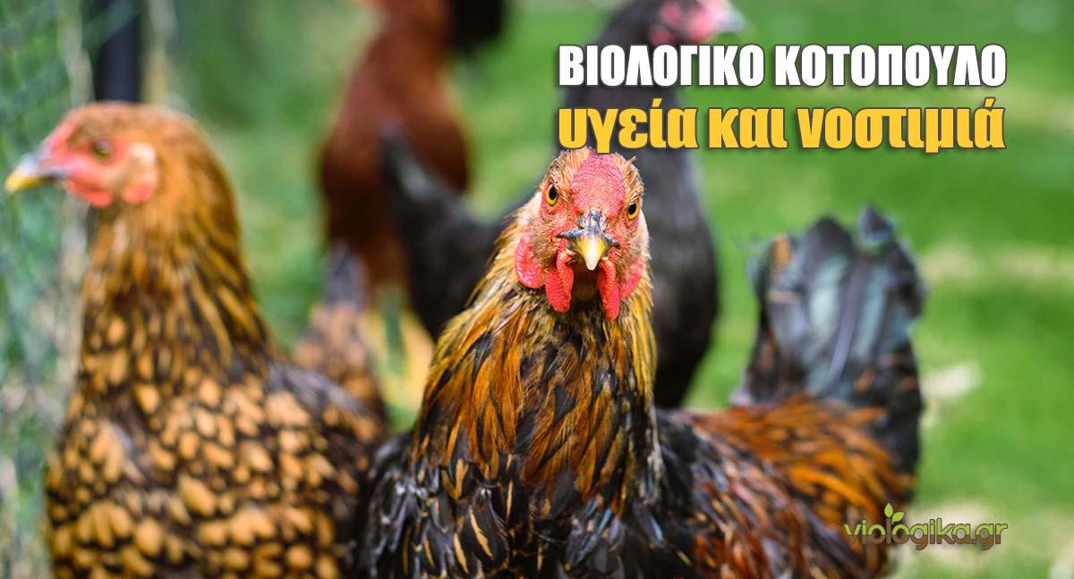 Βιολογικό κοτόπουλο, υγεία και νοστιμιά