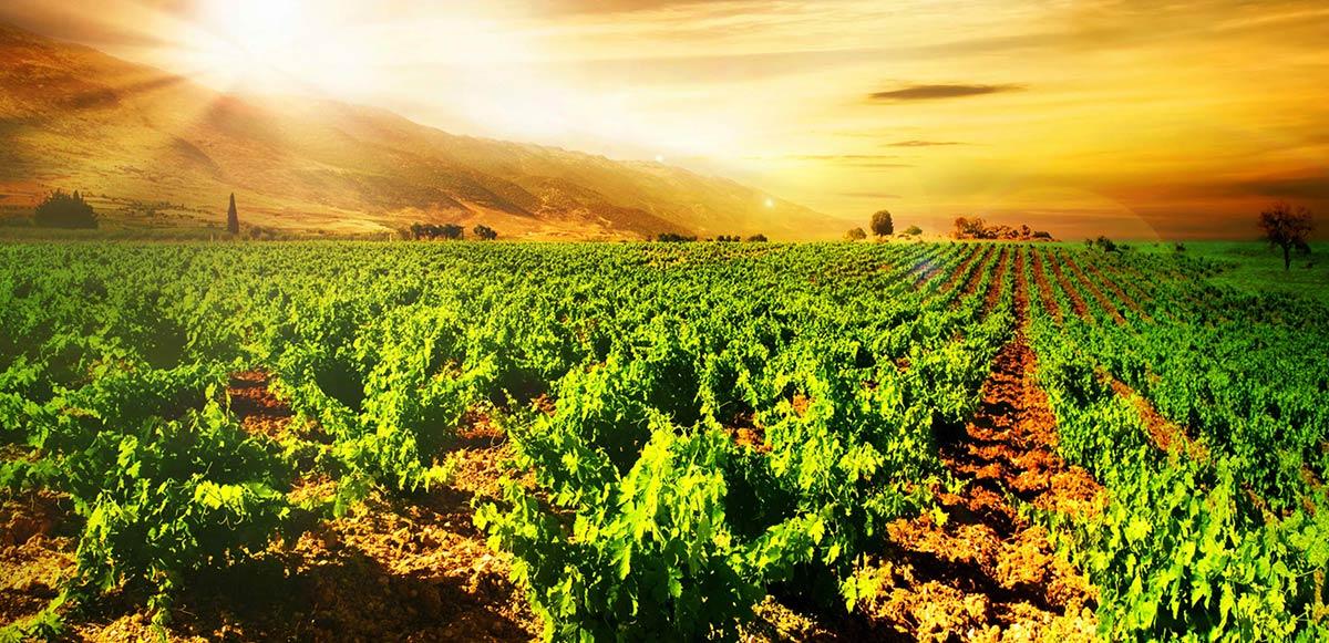 Πιστοποίηση βιολογικού κρασιού