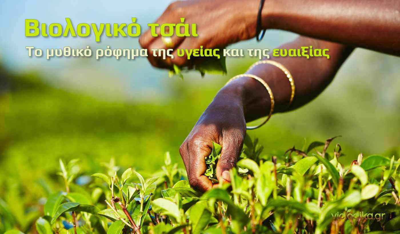 Βιολογικό τσάι, Βιολογικό τσάι Ελλάδας