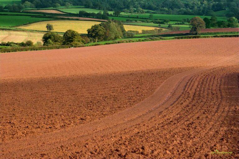 Αγρανάπαυση, η διακοπή καλλιέργειας για συγκεκριμένη χρονική περίοδο