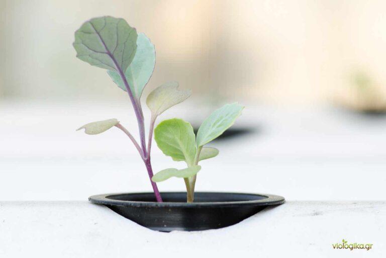 Γιατί η Ακουαπονική δεν είναι βιολογική καλλιέργεια