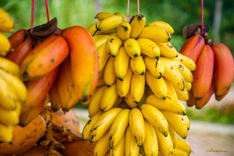 Βιολογικές μπανάνες
