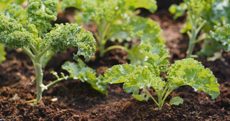 Παραδοσιακή καλλιέργεια σε χώμα