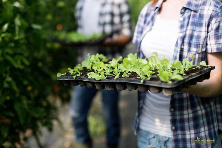 Οικολογική καλλιέργεια