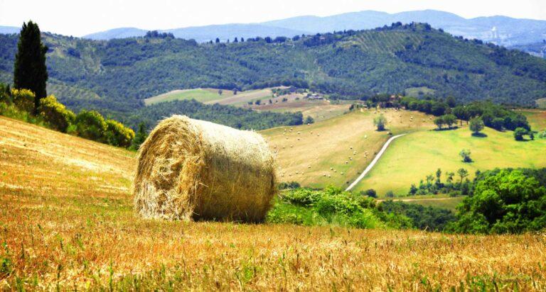 Βιολογικά Αγροκτήματα