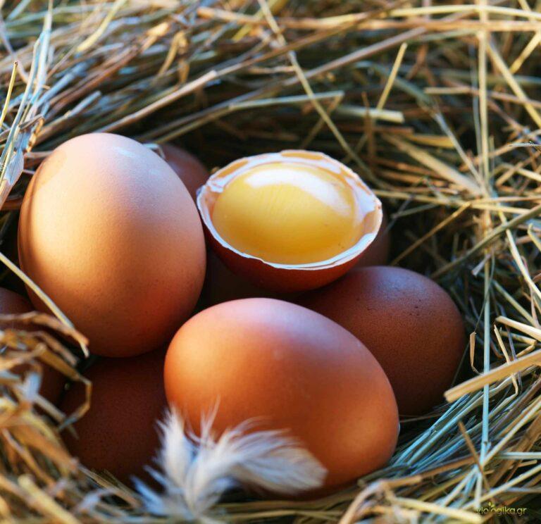 Βιολογικά αυγά κότας